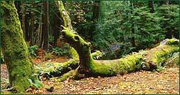 That fallen tree looks like a dragon!